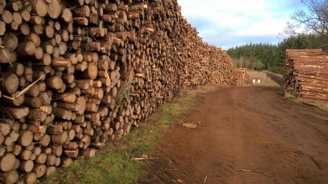 Euro timber glut could temporarily  affect buoyant UK market