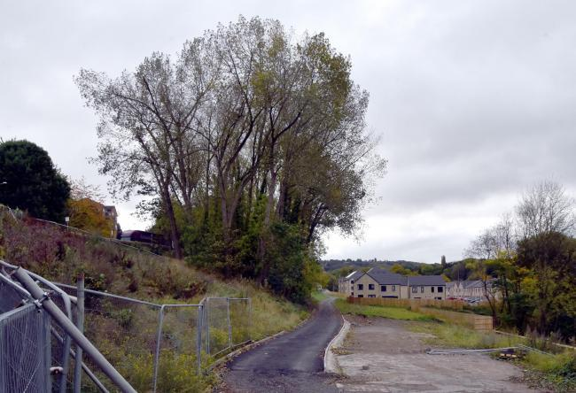 Plans for tree works refused, with claim of bias against Poplars