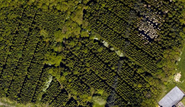 Image 1 – Aerial photography of commercial plantation. Top right of the image shows part of the larch plantation affected by waterlogging.