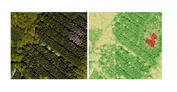 Forestry Journal: Image 2 – Left: Aerial photograph (from Image 1), Right: Hyperspectral imagery.