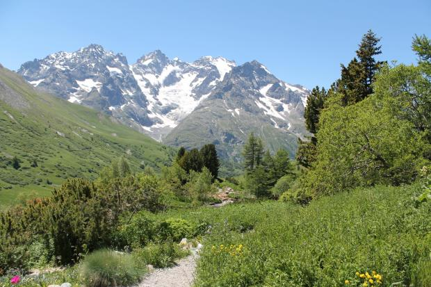 Forestry Journal: La Meije (3984 m) dominates the view west from the Col du Lautaret's botanic garden.