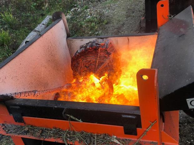 Forestry Journal: A truly fitting finale in the eradication of exotic insect pests. Micro-burners supplied by Kingwell Holdings seen here, late last year in Kent, burning Norway spruce infested by Ips typographus (photo courtesy of Kingwell Holdings).