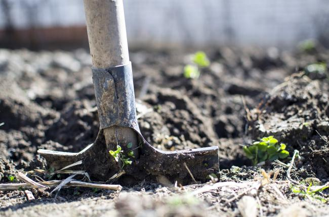 Government launches new £50m scheme to boost tree-planting