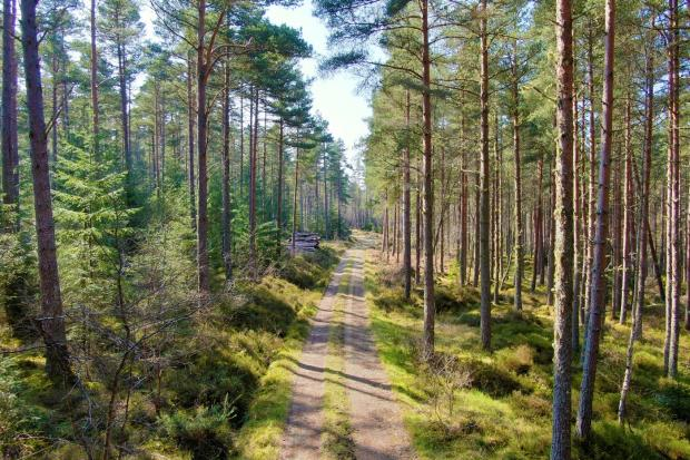 Another robust year for forestry, according to report