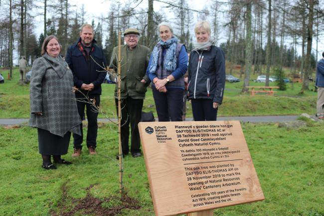 Tree planting marks 100 years of forestry in Wales