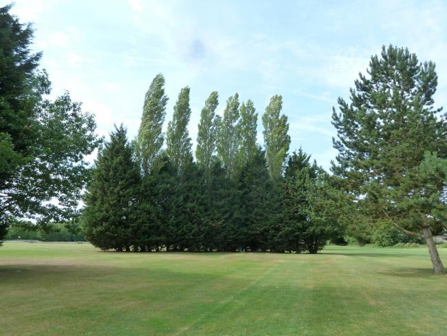No doubting the capacity of Leyland cypress to form a fast-growing, effective screen.