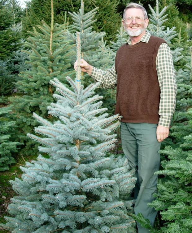 Forestry Journal: Colin Palmer with a blue spruce.