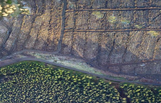 Forestry Journal: An aerial image of a restock site and mature forest.