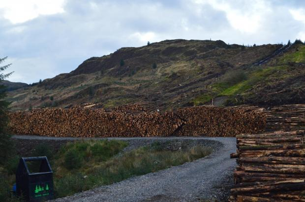 Forestry Journal: The An Carr harvesting site in Argyll and Bute.