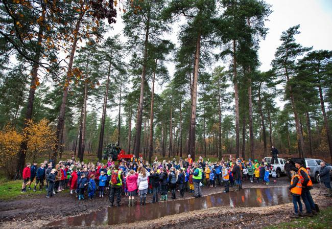 Kids help plant 1,300 new trees in estate woodland