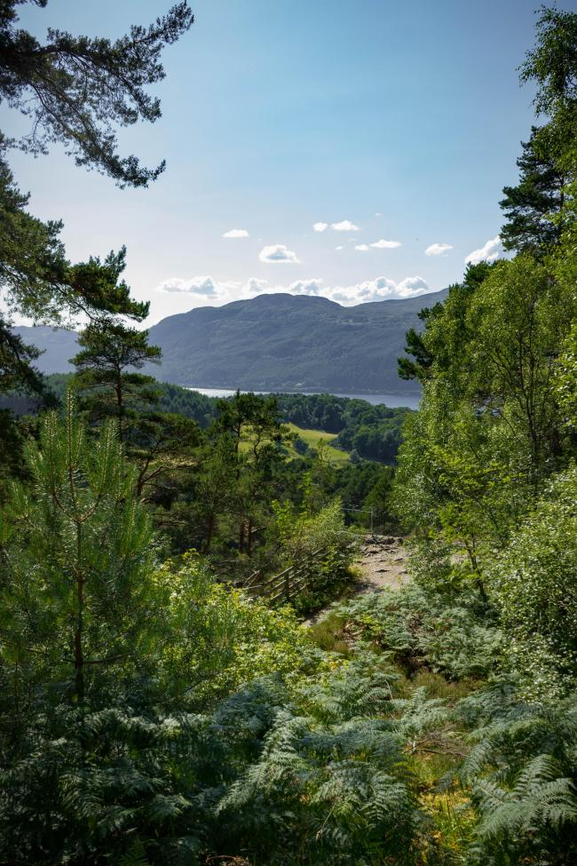 700-acre mountaintop woodland to be planted near loch ness