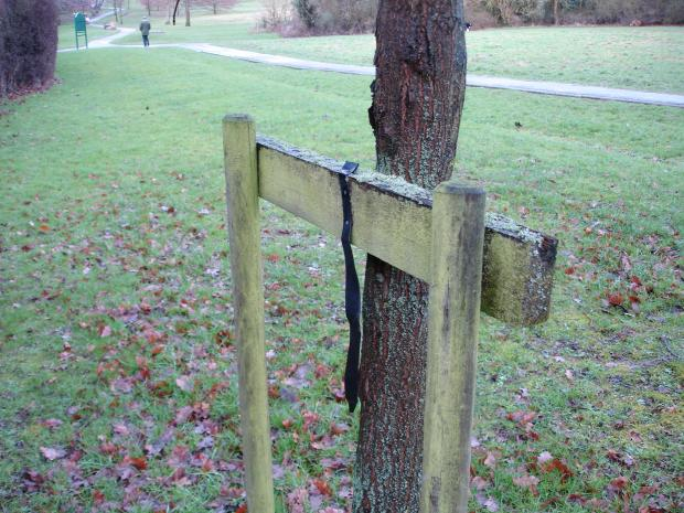 Forestry Journal: A lichen-encrusted cross-board (crossbar) which has already served its purpose with that extra bit of support for this now well-established English oak tree.