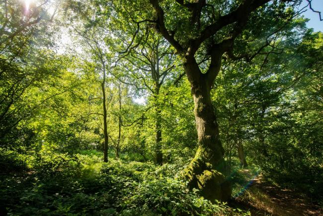 More than 1,000 ancient woodlands under threat, charity warns