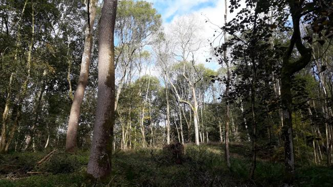 Pioneering ash dieback project  launches International Year of Plant Health