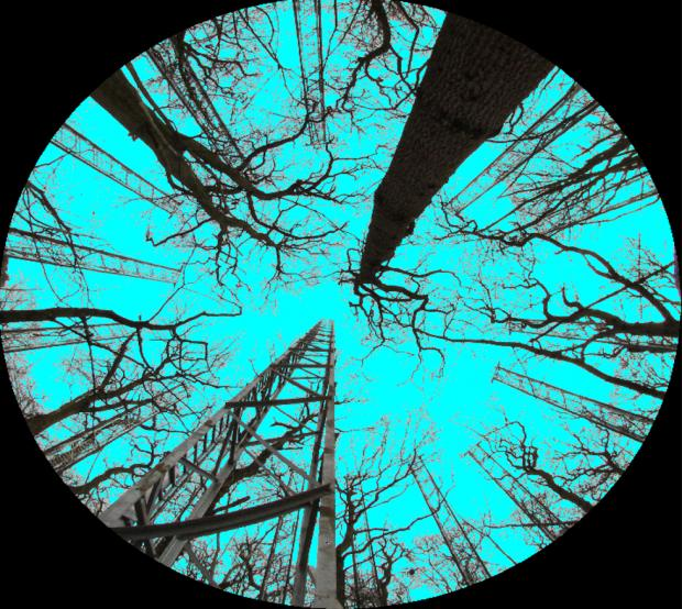 Forestry Journal:  Image taken in the array with hemispherical camera.