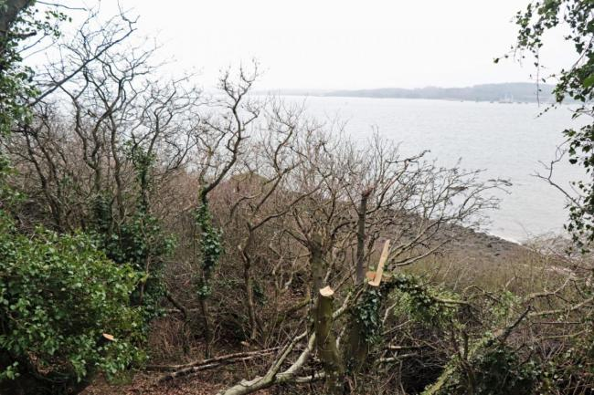 Anger at 'wanton destruction' of Dalgety Bay woodland