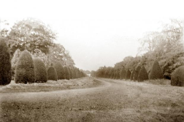 Forestry Journal: The Clipsham Yew Tree Avenue as it looked almost a century ago. The photographs are dated 1922.