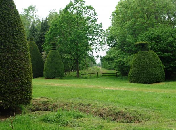Forestry Journal: Clipsham Park Woodland is adjacent to the Clipsham Yew Tree Avenue.