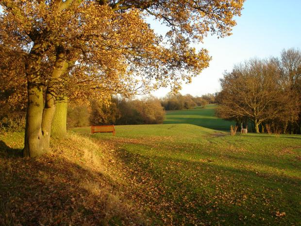 Forestry Journal: Autumn leaves are attractive but can seriously damage the quality of professional turf.