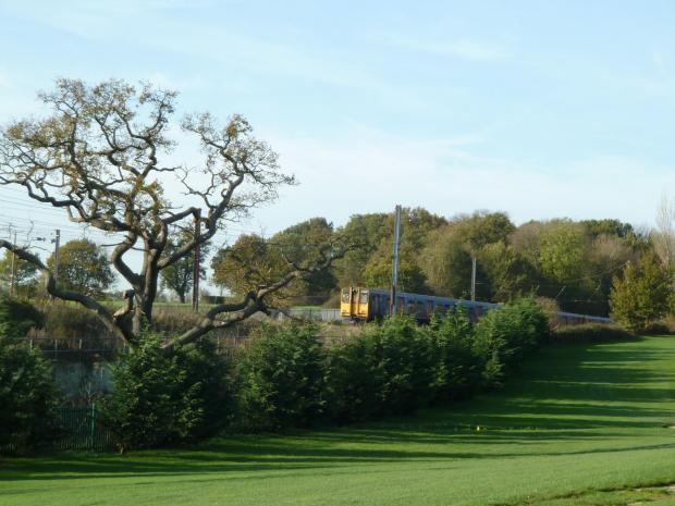 Forestry Journal: For accessibility reasons many of the country's early golf courses ran alongside railway lines. Fast-growing conifers are commonly used to screen the course from a railway.