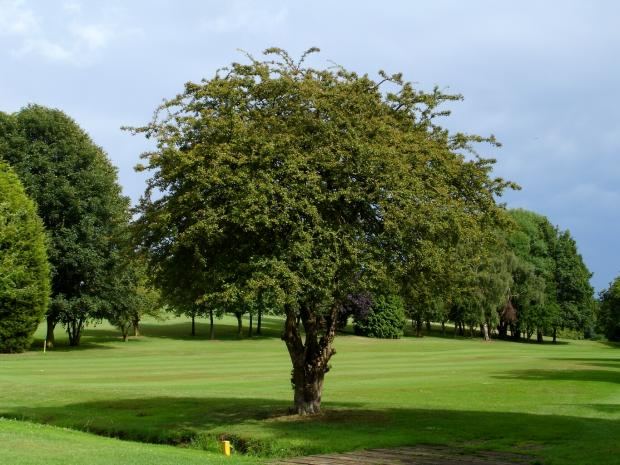 Forestry Journal: Trees situated in playing areas should be pruned to a position above head height, especially thorny species like the hawthorn shown here.