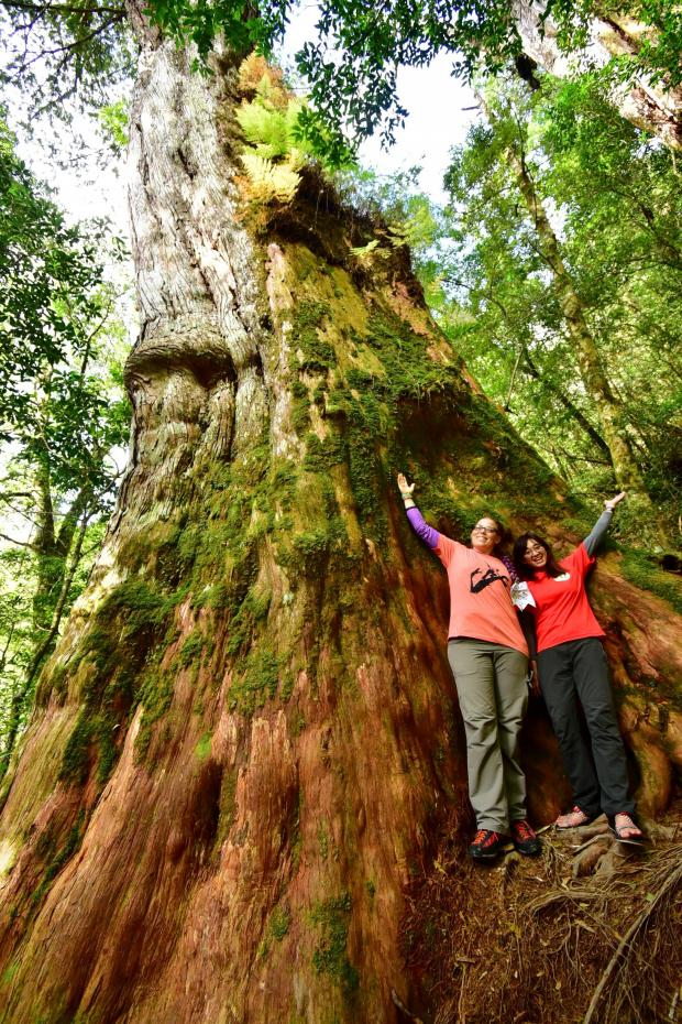 Forestry Journal: Next to one of the giant ancient Formosan Cypress trees in Taiwan with Sylvia Hsu. (Image credit: Weng Heng-bin.)