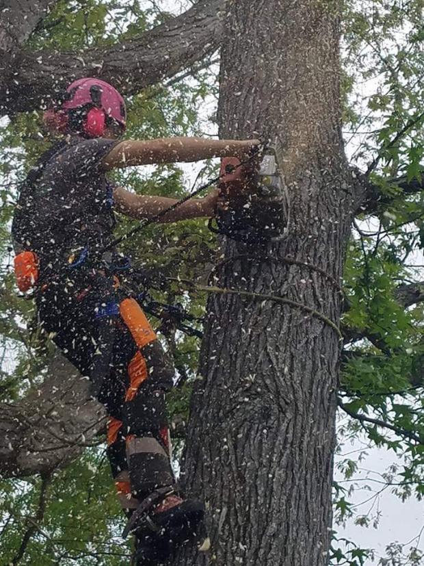 Forestry Journal: Cutting big wood for a crane removal. (Image credit: Scotty Olson.)