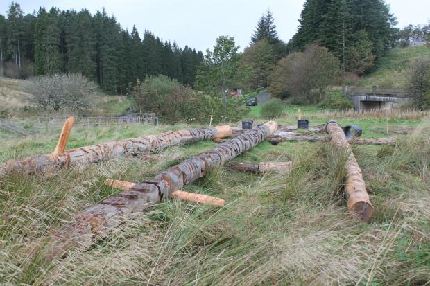 Forestry Journal: Simon Jackson's new totem poles lie awaiting erection at the Warksburn Picnic Site.