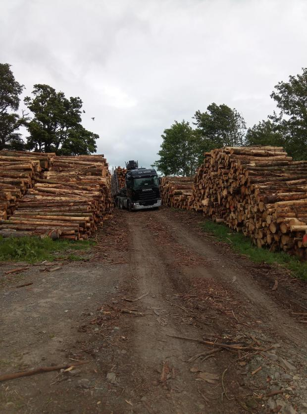 Forestry Journal:  Hawick Common Good main stacking area.
