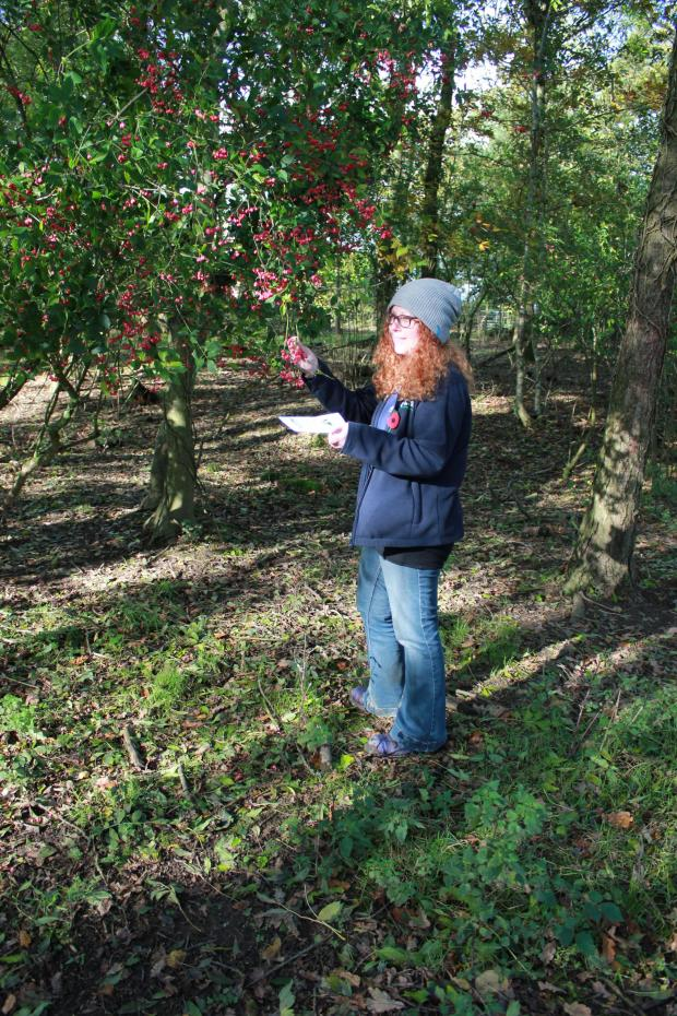 Forestry Journal: Taking a schools group on a tree ID walk.