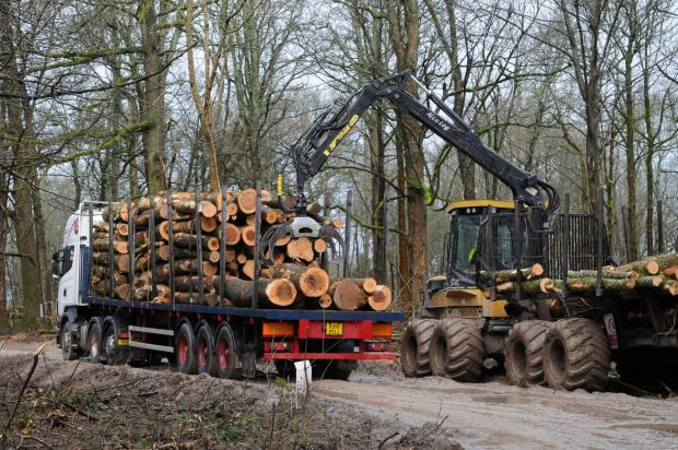 Forestry Journal: Timber wagons loaded, and loading by Dave Lister in his Ecolog 574C forwarder.