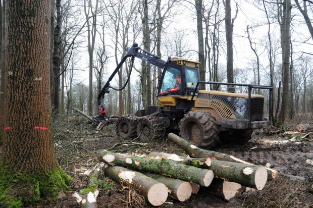 Forestry Journal:  Stems that are oversized are marked with a pink band for removal in Phase 3.