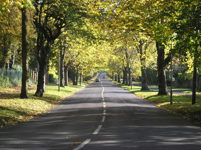 New strategy aims to protect Sheffield's street trees for generations