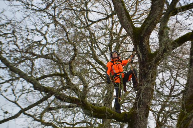 Forestry Journal: Jo Hedger, director of New Forest-based Arbor-Venture Tree Care, and H-Team member, in the canopy.