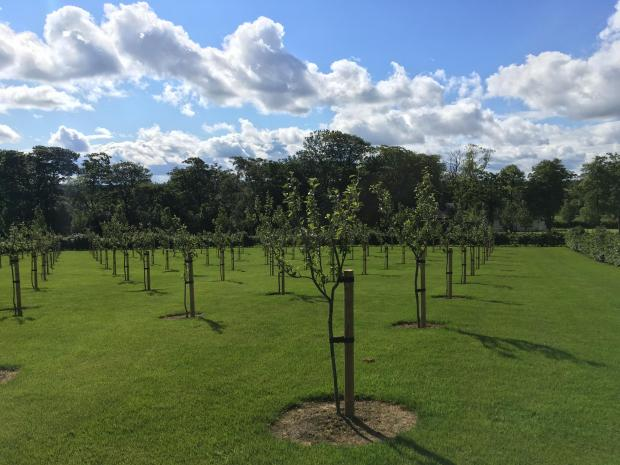 Forestry Journal: Fruit trees can produce a usable crop within three to four years, John said.