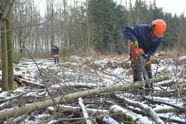 Forestry Journal: Billy cuts while Declan observes from a safe distance.