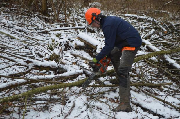 Forestry Journal: Lee makes quick work of these branches.