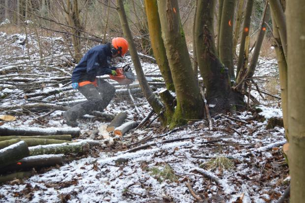 Forestry Journal: Billy takes down a tree in an area of previously unmanaged woodland on the Falkland Estate.