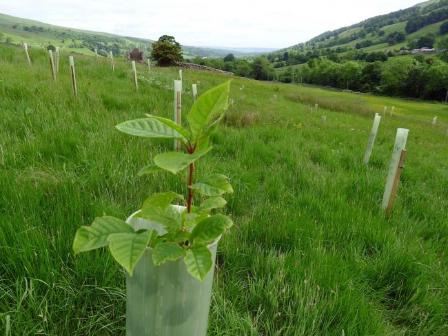 Grants available for tree-planting projects across East Riding