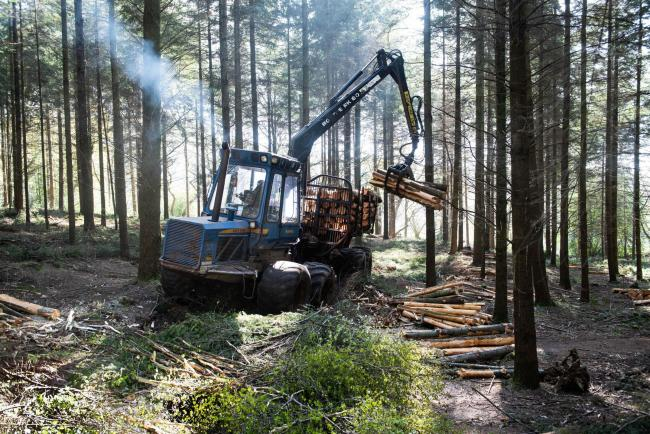 Essential forestry work continues at Clinton Devon Estates during COVID-19 crisis