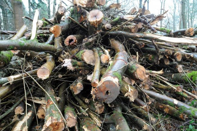 FCA produces diseased ash felling guide