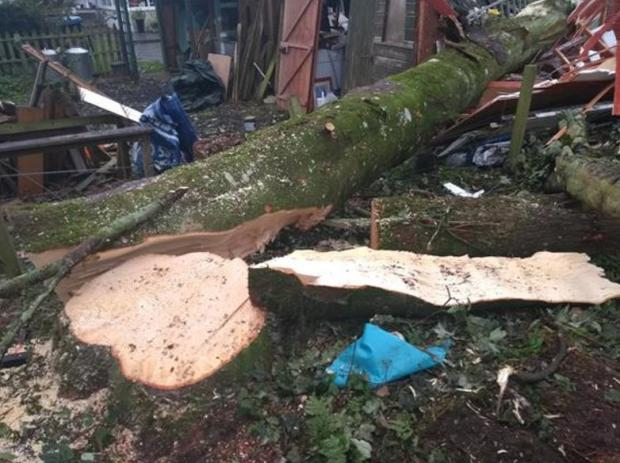 Forestry Journal: These pictures, showing the result of a tree-felling incident involving diseased ash, were widely circulated online via FISA.