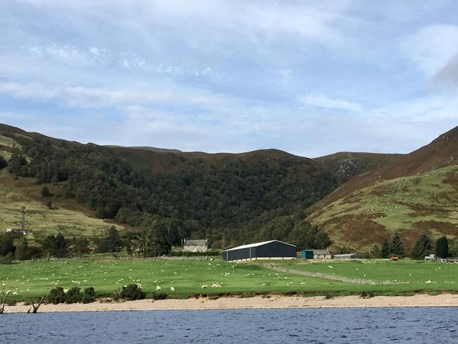 Scottish woodland plantings on farms up