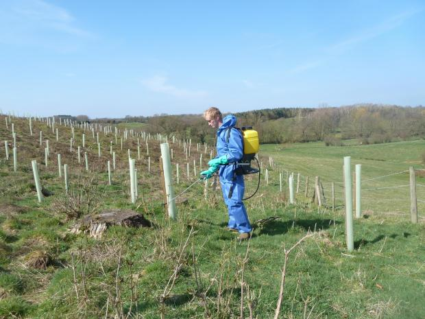 Forestry Journal: Newly planted trees in Suffolk protected against rabbit and hare herbivory.
