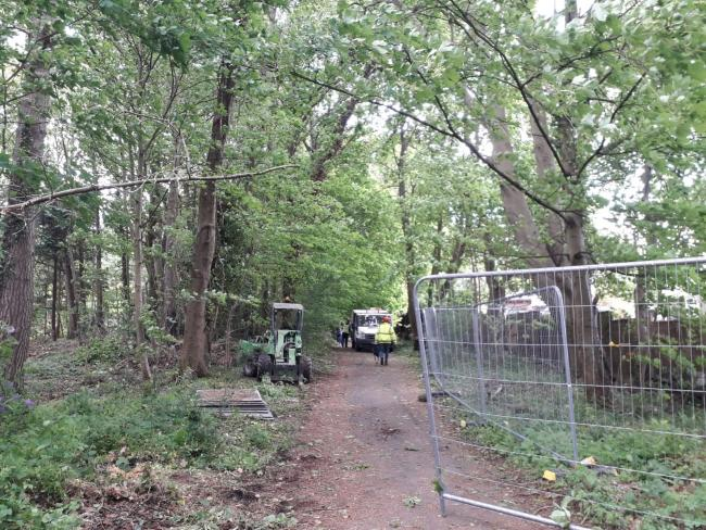 Controversial work begins to axe trees in ancient woodland