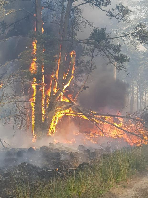Forestry Journal: Picture: DWFRS.