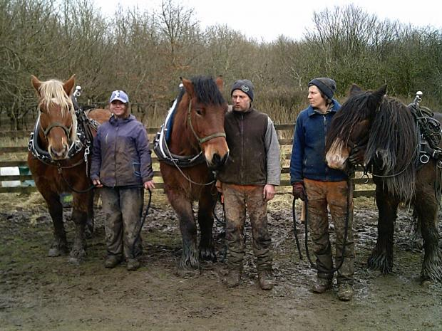 Forestry Journal: The labour force of Teamwork Horse Logging (left to right): Tin Tin, Gabriella, Stig, David, Steffi and Tyne.
