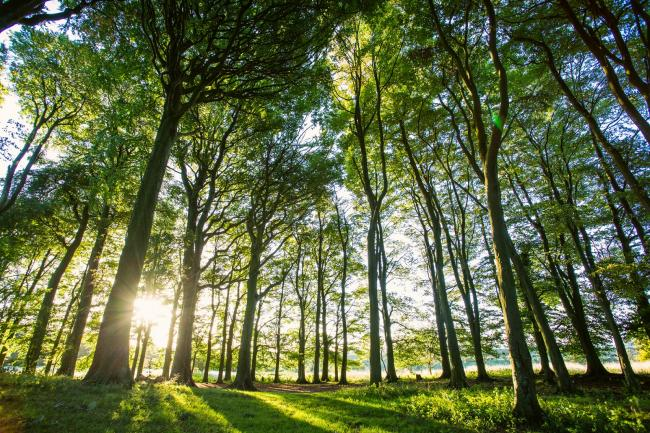 South Downs National Park to celebrate World Environment Day