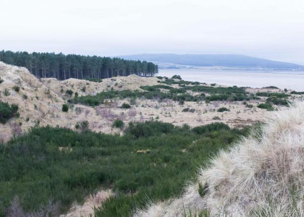 Forestry Journal: A section of the dunes before treatment was carried out, showing the broom and other undesirable plant cover.