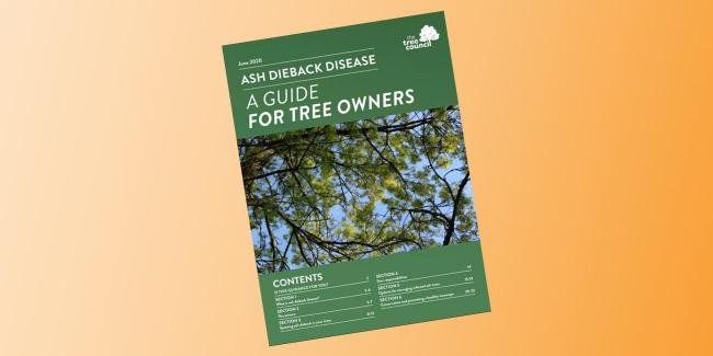 Homeowners 'have role to play' in tackling ash dieback, new guidance says